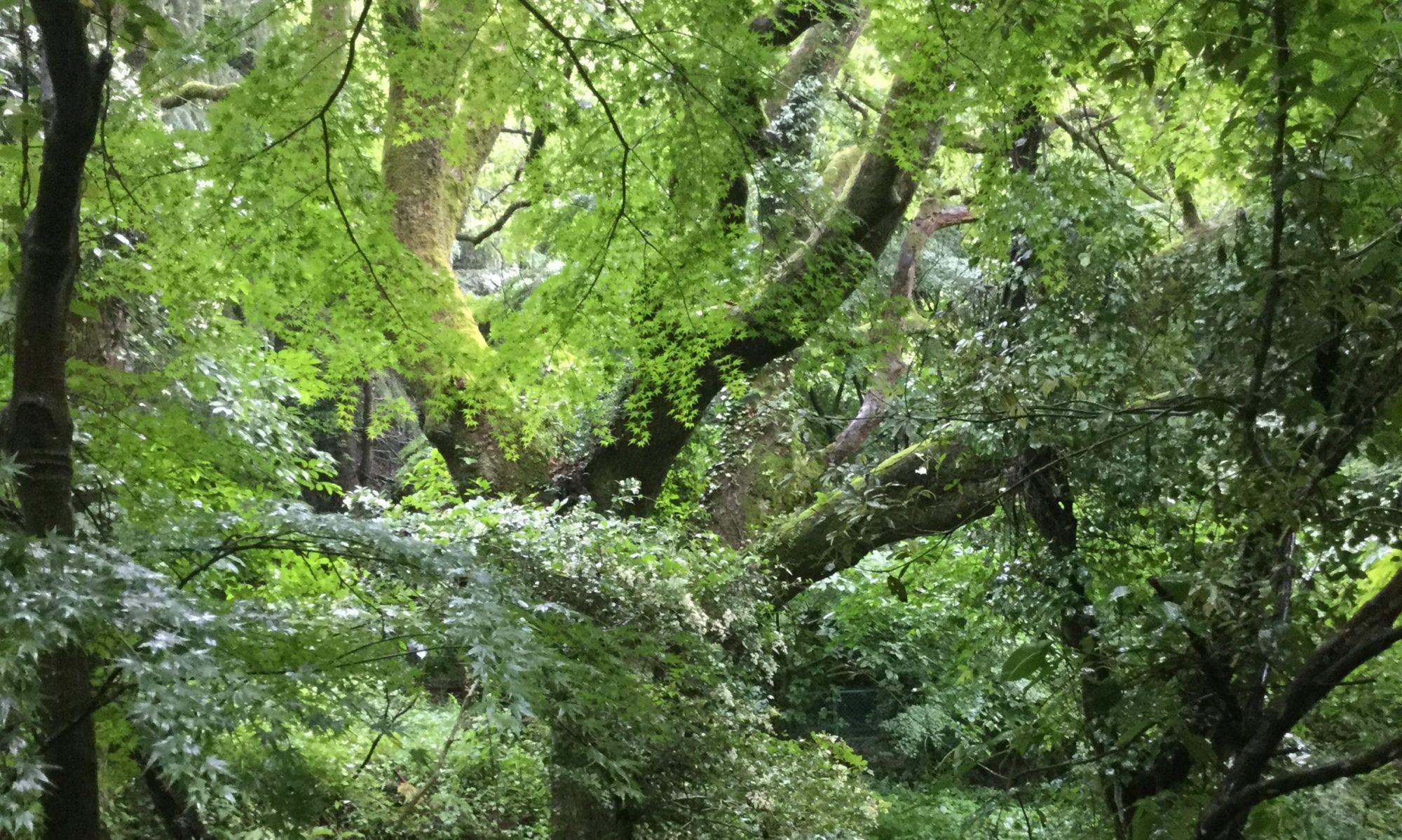 はぴゆるの森